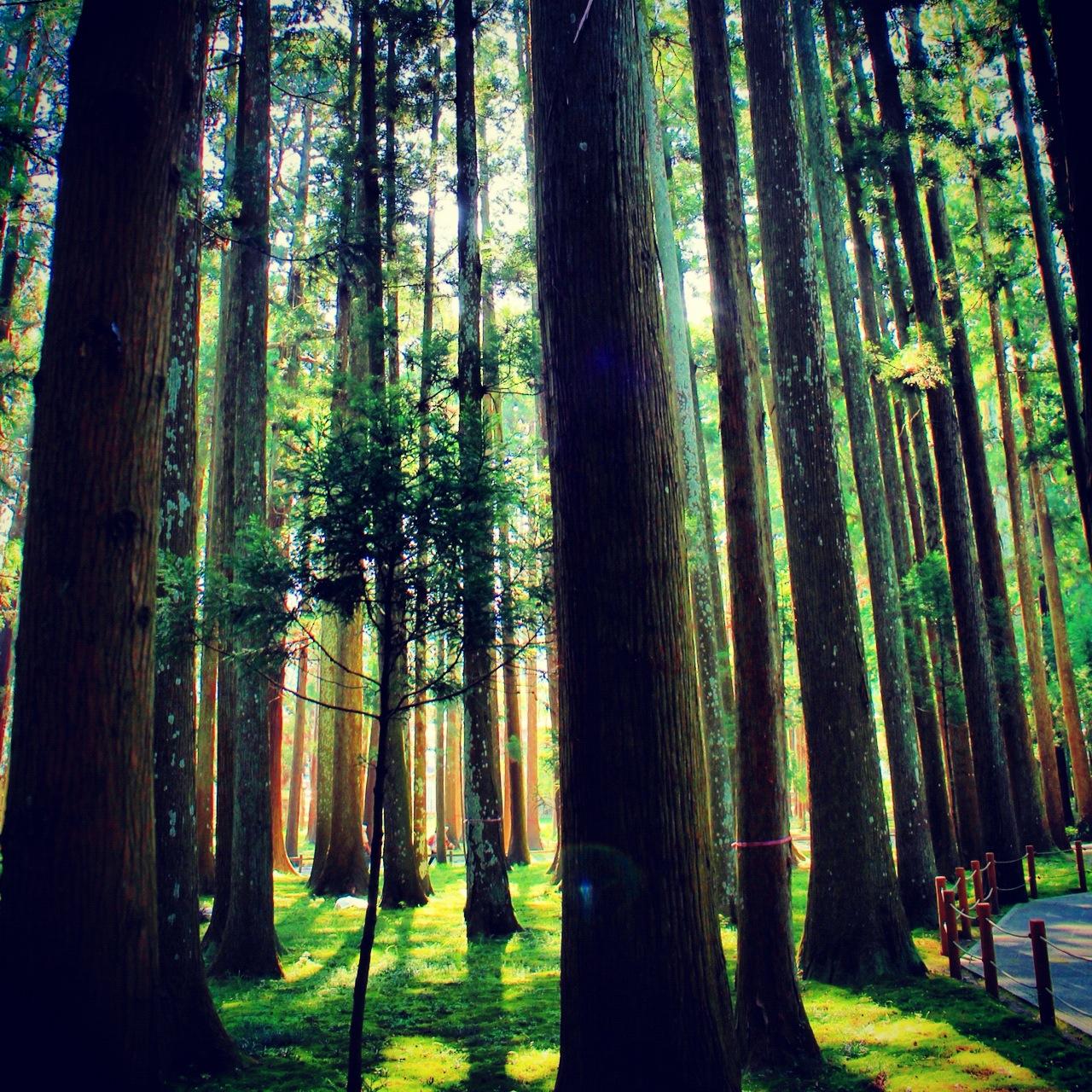 Matsushima Bay forest